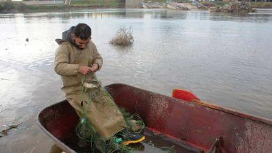 بلدية الشعب تصادر كمية من الأسماك في الرقة